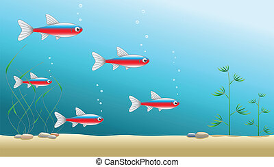 Aquarium or ocean background - A shoal of cardinal tetras in...