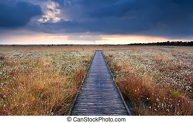 wooden path on swamp with cotton-grass after storm