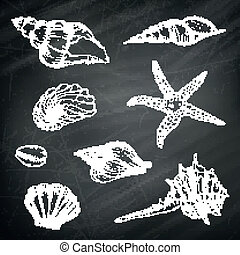 Vector Seashells on a Chalkboard Background