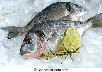 gilthead on ice - gilthead (dorade) on ice at the seafood...