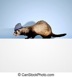Polecat sitting on banner - Image of funny polecat sitting...