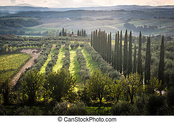 Tuscany - Panoramic view of scenic Tuscany landscape with...