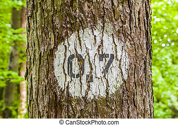 pattern of trees in forest with distance marker - pattern of...