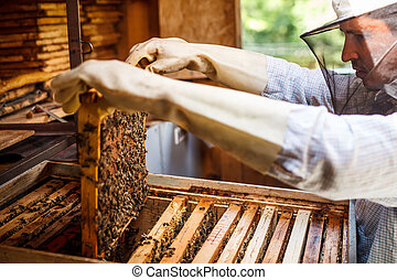 Working apiarist and frame with bees