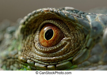 green iguana eye - macro of a fantastic green iguana eye