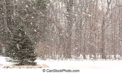 Heavy Snow with Large Snowflakes - Large snowflakes slowly...