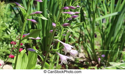 Group of violet flowers