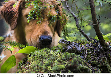 Dog discovering a toad in a forest - Dog looking at a toad...