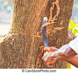 Logger cutting wood