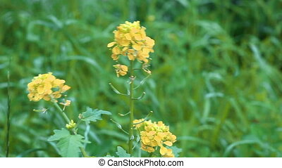Group of yellow flowers