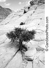 Close up on the Rocks with a Small Tree - Snow Canyon Utah -...