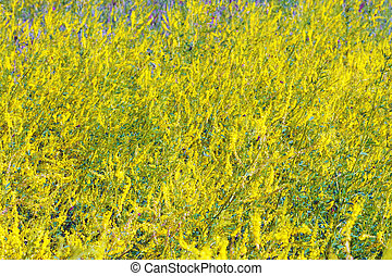 Field of wild flowers. Background