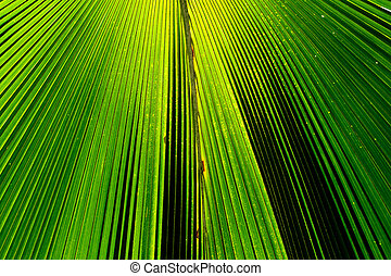 Abstract image of Green Palm leaves