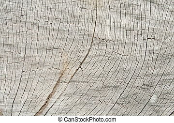 Grunge of texture wood materials background