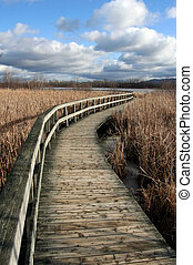 Deserted wooden path - Boardwalk among dried reeds in winter