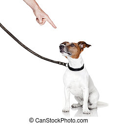 bad dog looking up - bad behavior dog being punished by...