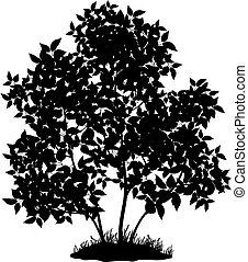 lilás, árvore, capim, silueta