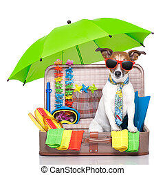 summer holiday dog - summer vacation dog in bag full of...