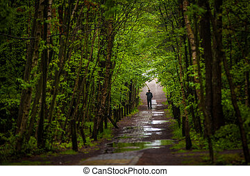 man walking through forest - man walking through a damp and...