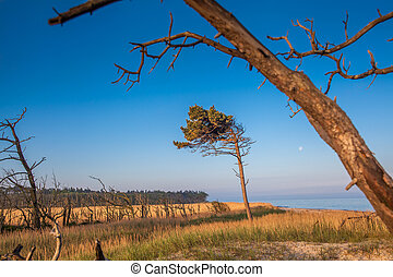 dune with crooked tree - crooked tree growing on the beach