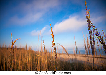 reeds growing on the shore