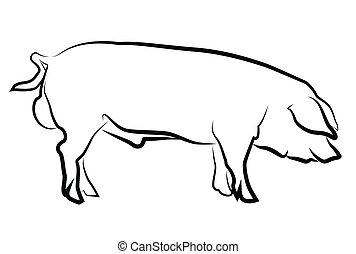świnia, sylwetka, odizolowany, biały
