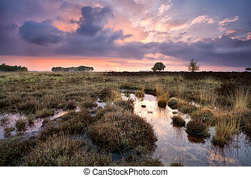 warm calm sunset over swamps in Drenthe, Netherlands