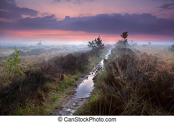 wet narrow path in fog over swamps, Drenthe, Netherlands