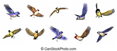 Set of finch birds - 3D render - Colorful finch birds in...