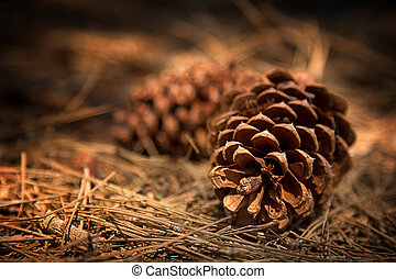 Deep in the forest - Fir cones on the forest floor with...
