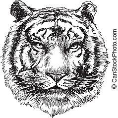 tiger head hand drawn vector illustration