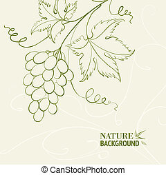 Grape wine card. Vector illustration.