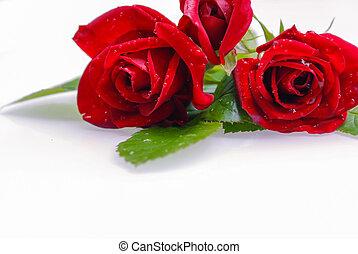 Rote Rosen freigestellt - Rote Rosen freigestellt auf wei?er...