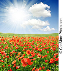 red poppy field with sunny sky