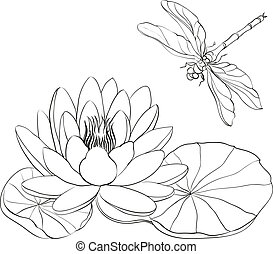 Water Lily and dragonfly. - Water Lily and dragonfly...