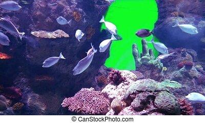 aquarium life with green screen in saudi arabia