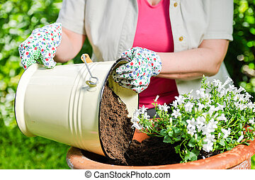 Planting flowers - A mature woman planting flowers, sunny...