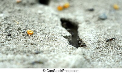 Small ants on the ground