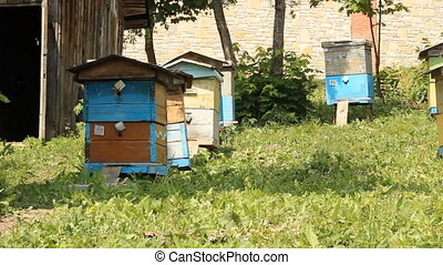 The apiary. Beehives