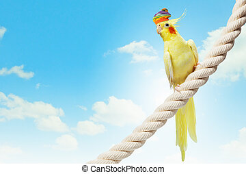 Funny parrot in hat - Image of funny parrot in hat sitting...