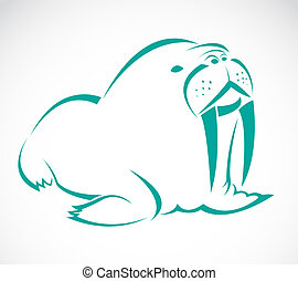 Vector image of an sea lion on a white background