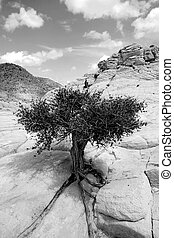 Close up on the Rocks with a Small Tree - Black and White -...