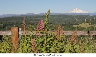 Mount Hood with Wild Flowers and - Scenic View of Mount Hood...