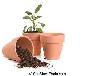 arcilla, ollas, con, Suciedad, planta de semillero