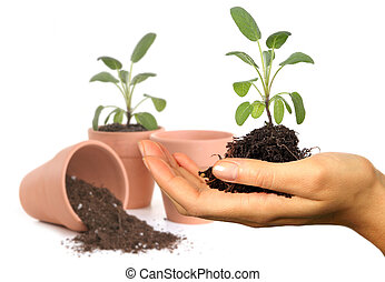 Womans Hand Holding New Springtime Seedling