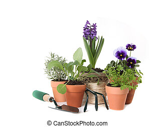 Happy Spring Time Herb Gardening on White Background With...