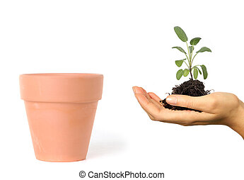 Woman Holding Seedling and Roots