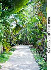tropical garden with pathway