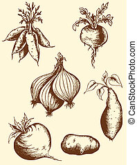 Hand drawn roots - Set of vector vintage hand drawn roots