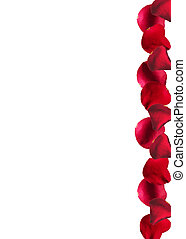 background with rose petals
